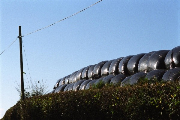 Silage bales, 2005