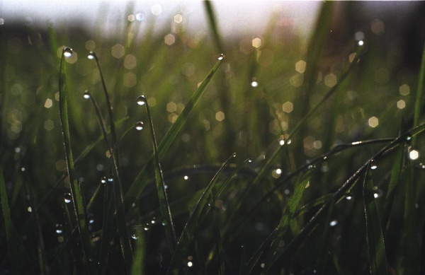Wet grass in the morning, 2005