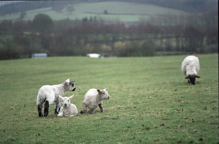 March 2006: Lambing time